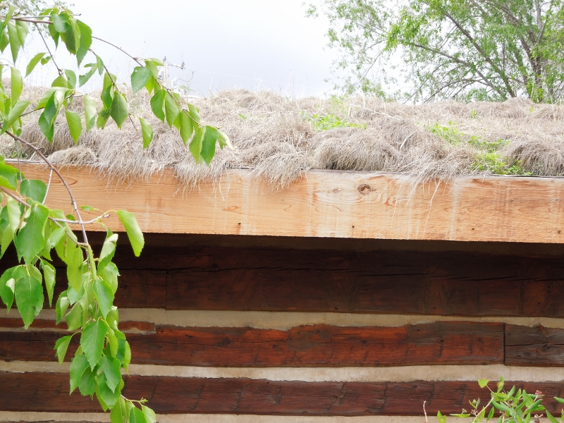 The gray sod roof of the cabin. The roots of the grass bind the soil.